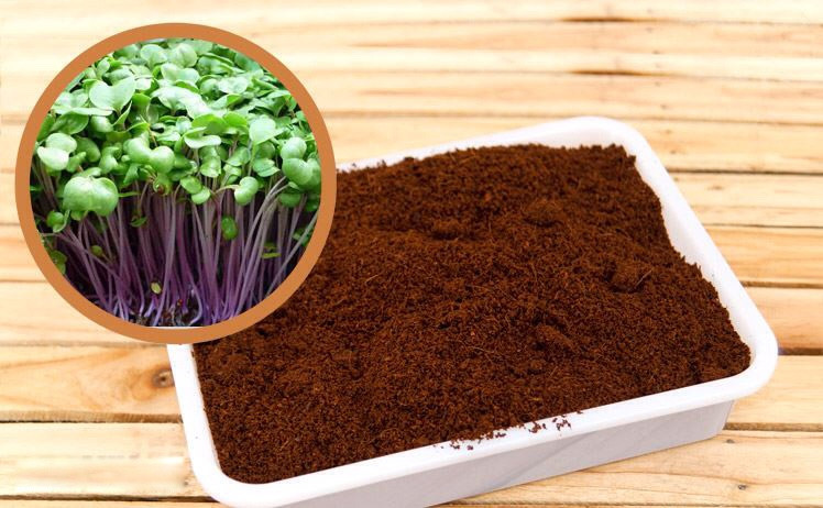 Chia sẻ trọn bộ cách sử dụng mùn cưa trồng cây dành riêng cho bạn